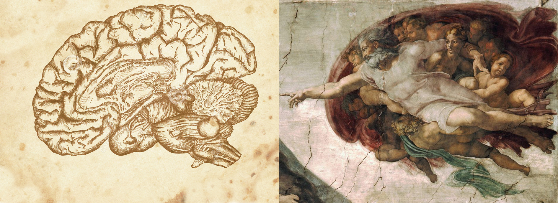 hersenen vs michelangelo